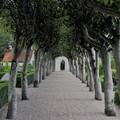 Billede af indgangssti med træer til Alslev Kirke